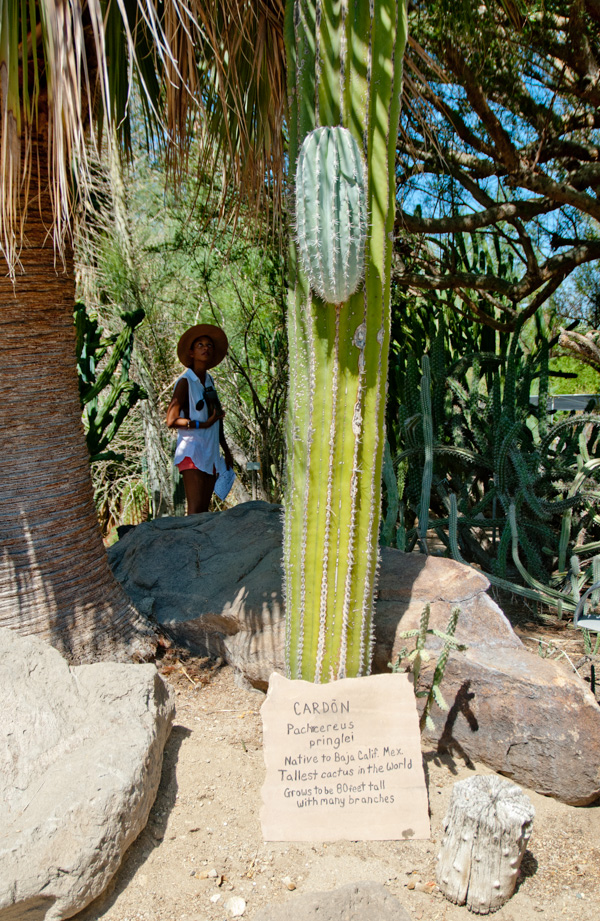 Entering Cactus Heaven Inside The Moorten Botanical Garden Of Palm Springs The Horticult