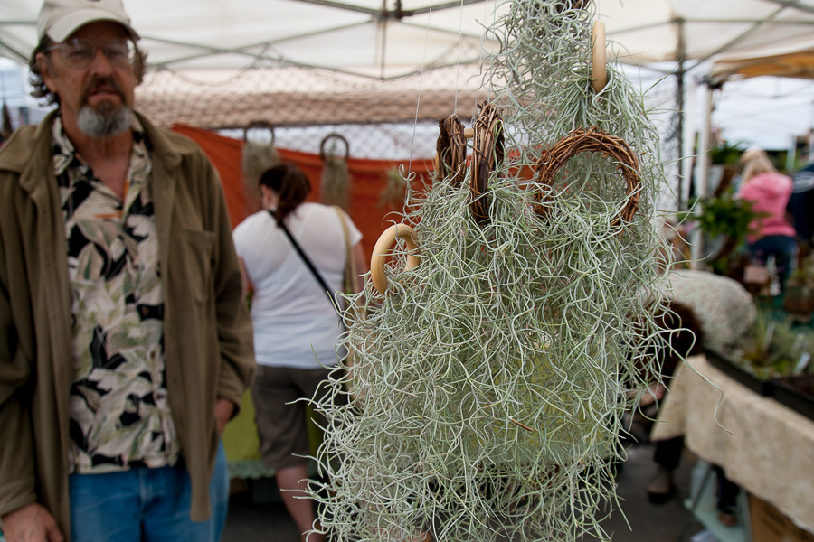 We dug all the airplants that were in attendance, including this shaggy, silvery tillandsia, spotted at Dave's Backyard Tillandsia.  We'll be contacting Dave for the ID.