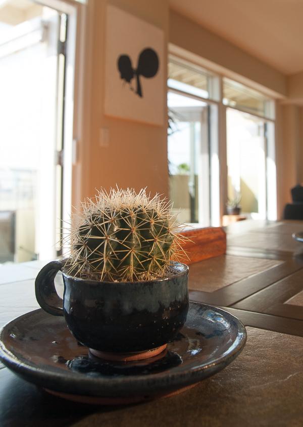 cactus-euphorbia-house-plant-garden-tour__RMB6898