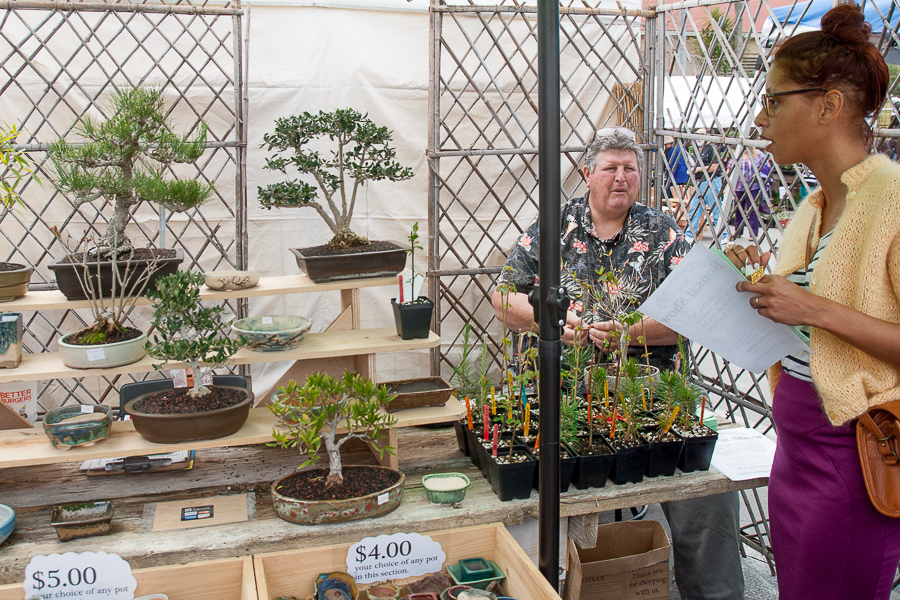Finding peace in small packages inside the bonsai booth.