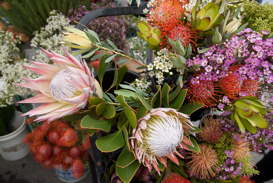 At the California Protea Association, king protea mingle with wax flowers and tango pin and spider pin protea.