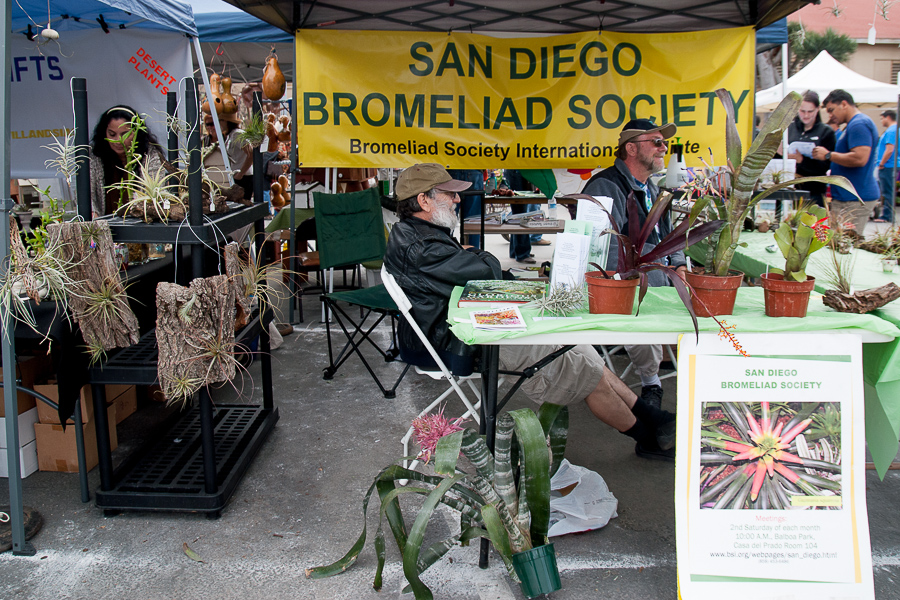 Just hangin' with the bromeliads. The dedicated society meets on the second Saturday of every month at Balboa Park.