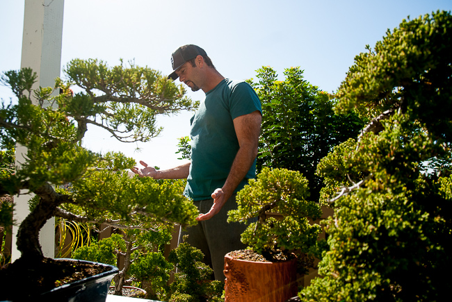 """A lifelong process comparable to golf or chess, bonsai is """"truly a blend of art and horticulture,"""" Barry says, """"and an art that one can never master."""""""