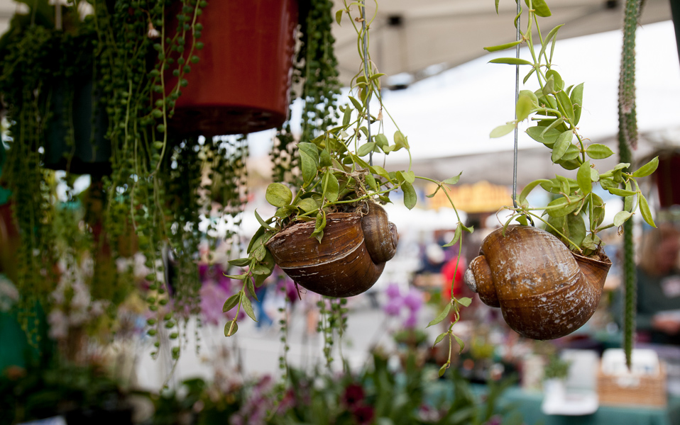 Darling little snailshell hanging planters.