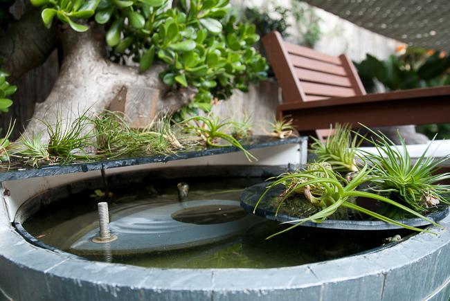 tillandsia-soak-fertilize_RMB8065