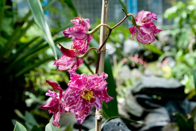 Jardin Botanico:  Orchid Garden