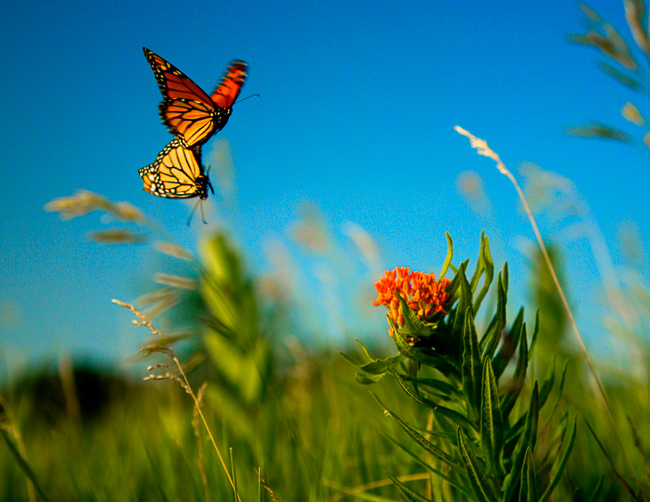 Disney-Nature-Wings-of-Life-thehorticult-2072558