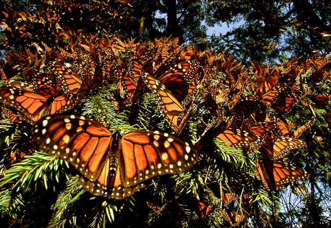 Disney-Nature-Wings-of-Life-thehorticult-41