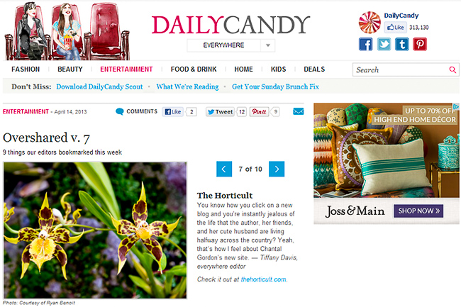 dailycandy-thehorticult-2