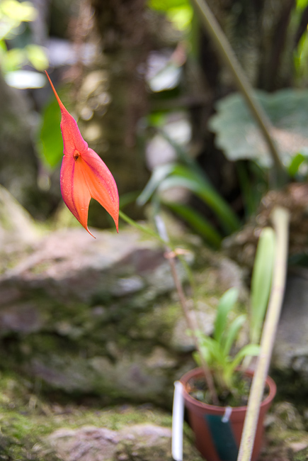 orchids-quito-botanical-garden-thehorticult-ryanbenoitphoto-0745