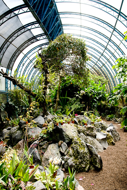orchids-quito-botanical-garden-thehorticult-ryanbenoitphoto-0754
