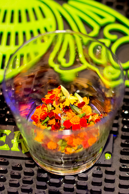 patron-micro-marigolds-sd-museum-of-art-alive-2013-opening-celebration-RMB_0126-ryanbenoitphoto-for-thehorticult