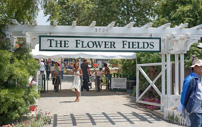 carlsbad-flower-fields-RMB_0936