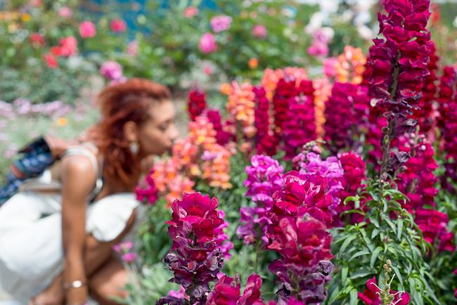 carlsbad-flower-fields-RMB_1088