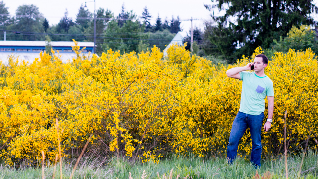 snap crackle and pop scotch broom sweeps seattle the horticult rh thehorticult com