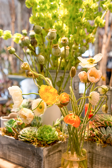 Icelandic poppies with moody stems are ideal for the mom with a soft spot for Van Gogh. Opium poppy bulbs (rear) will add a whiff of danger to the bouquet.