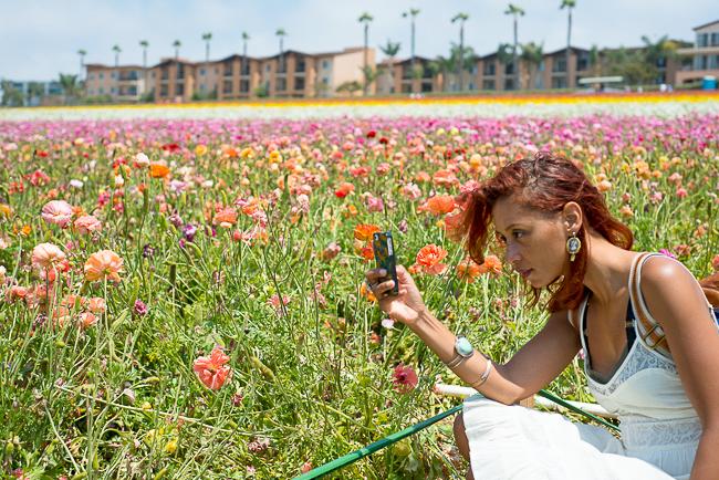 ranunculus-carlsbad-flower-fields-RMB_1007