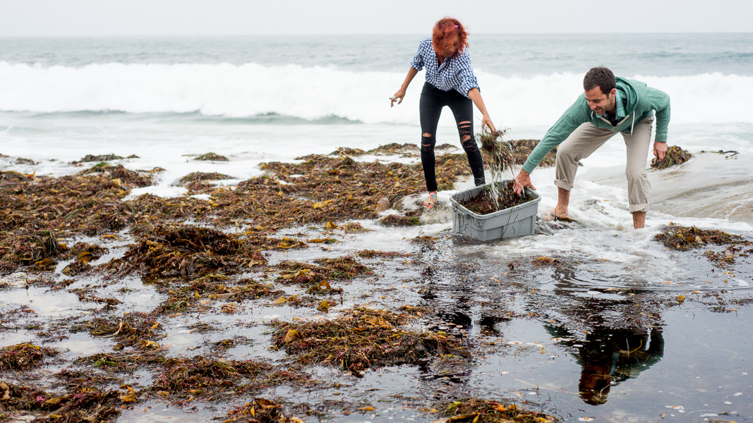 how to make your own kelp fertilizer