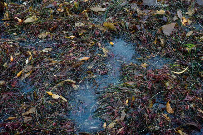 Seaweed Fertilizer