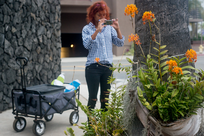 Couldn't pass up our favorite street orchids. If you're a local it's La Jolla Blvd and Bonair Street.