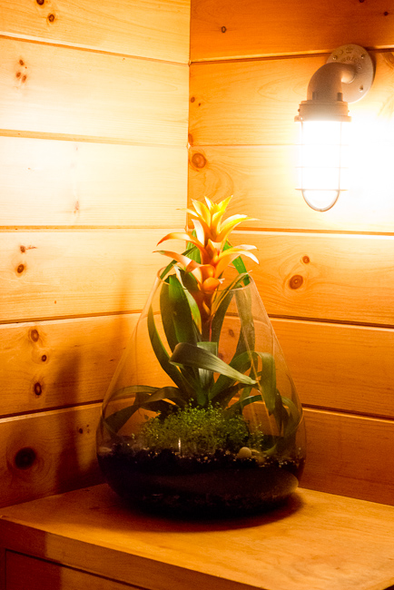 The-Ruschmeyers-bromeliad-ryanbenoitphoto-thehorticult-RMB_4419