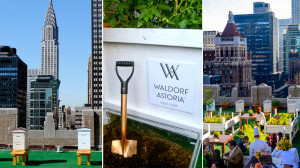 Photos courtesy of Waldorf Astoria