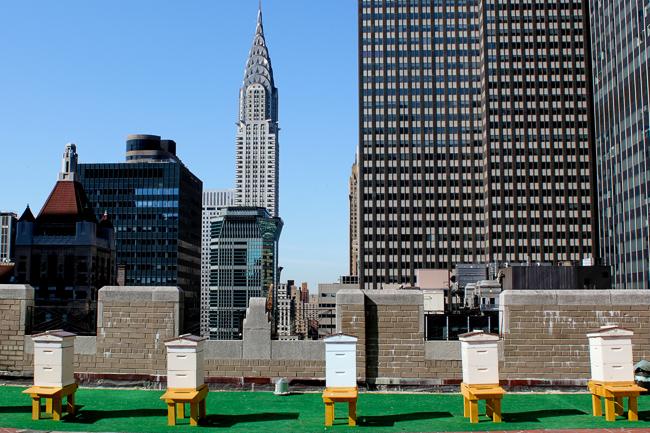 Waldorf Beehives Hi-Res