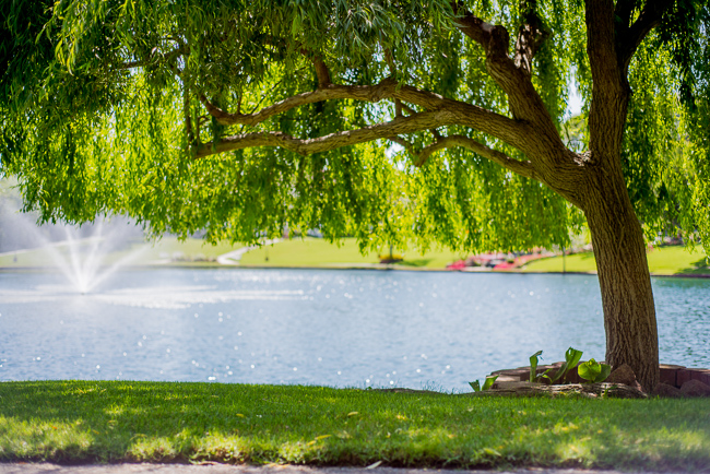 grand-tradition-gardens-ryanbenoitphoto-thehorticult-RMB_2930