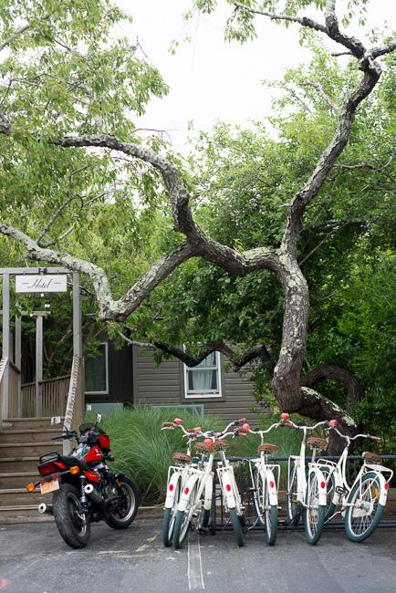 Black cherry tree at Ruschmeyer's Montauk