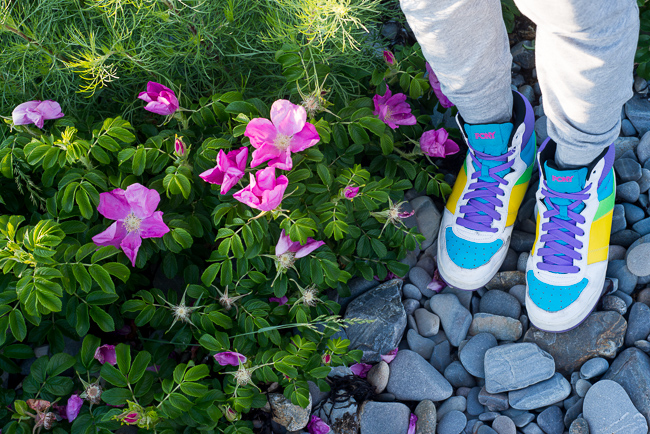 rosa-rugosa-japanese-rose-ramanas-ryanbenoitphoto-thehorticult-RMB_4721