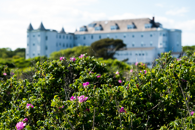 """Japanese roses along Biddeford Pool, Maine, brighten the view of the Marie Joseph Spiritual Center. (Formerly a home for """"unwed mothers."""")"""