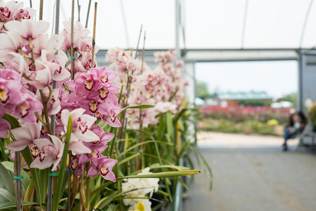 allergy-free-gardening-orchids-ryanbenoitphoto-RMB_1133
