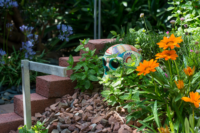 day-of-the-dead-skulls-garden-ryanbenoitphoto-thehorticult-RMB_5675