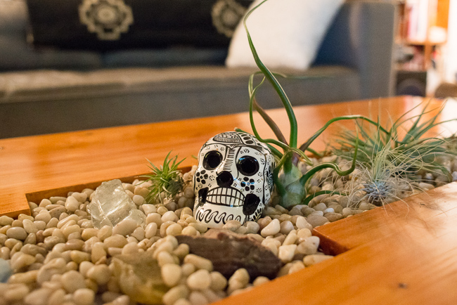 day-of-the-dead-skulls-garden-ryanbenoitphoto-thehorticult-RMB_5717