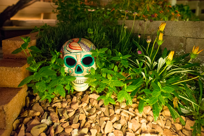 Head Strong: How Day-of-the-Dead Skulls Added Life to Our Landscape ...