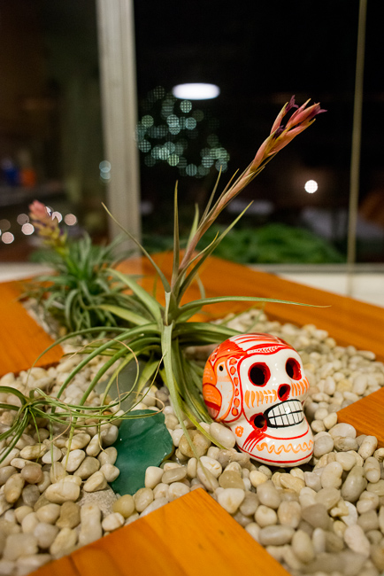 day-of-the-dead-skulls-garden-ryanbenoitphoto-thehorticult-RMB_5742