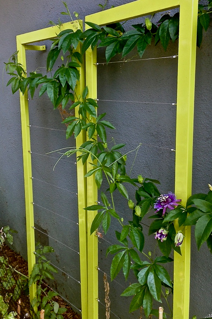Ina Wall Trellis in leaf color, growing Passion Flower vine