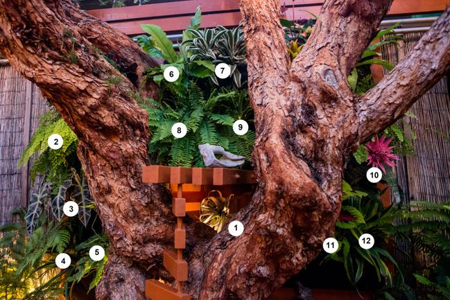 1. Tillandsia xerographica 2. Adiantum (maidenhair fern) 3. Alocasia 'Polly' 4. Bromeliad 5. Philodendron 6. Asplenium nidus (bird's nest fern), 7. Dracaena 8. Nephrolepis exaltata x bostoniensis (Boston fern) 9. Dracaena fragrans 'Lemon Lime' 10. Aechmea 'Primera' bromeliad 11. Solenostemon (coleus) 12. Dracaena fragrans 'Lemon Lime'