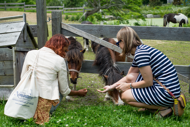 Snug Harbor Farm ponies