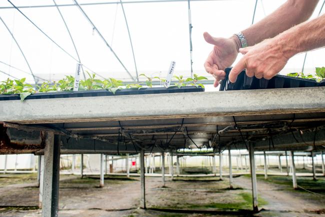 Weidner's greenhouse