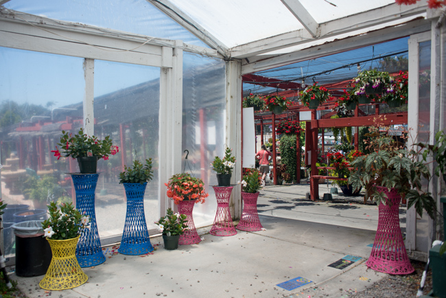 Plant stands at Weidner's Gardens.