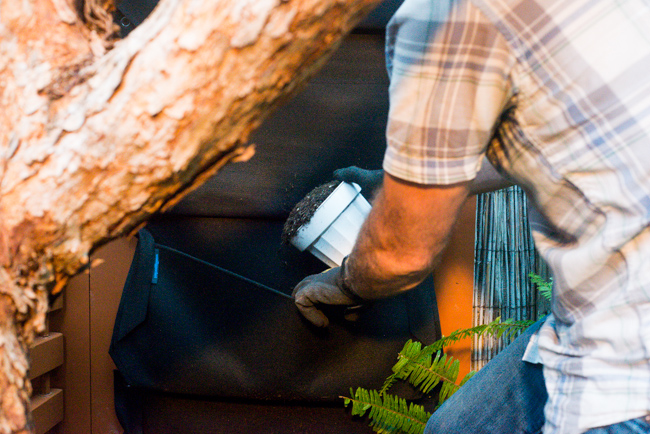 living-wall-DIY-Woolly-Pockets-ryanbenoitphoto-thehorticult-RMB_3584