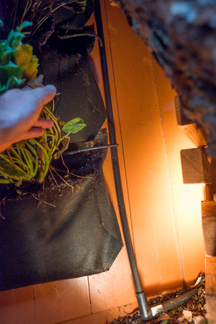 living-wall-DIY-Woolly-Pockets-ryanbenoitphoto-thehorticult-RMB_7041