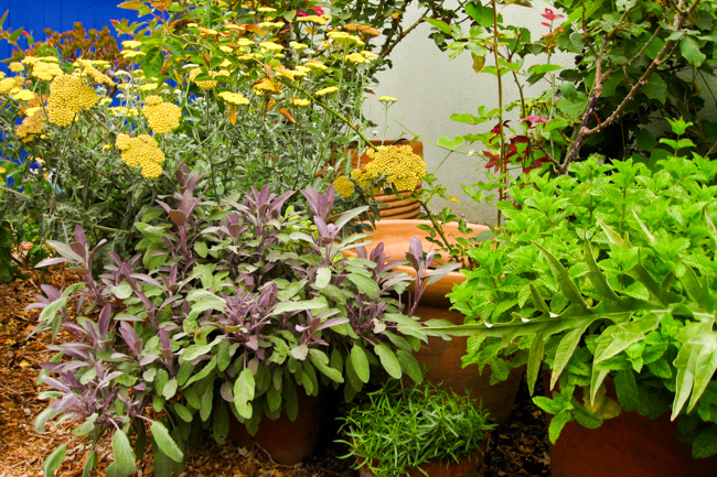 Gardenerd-featured-on-The-Horticult-Potted Herb Garden