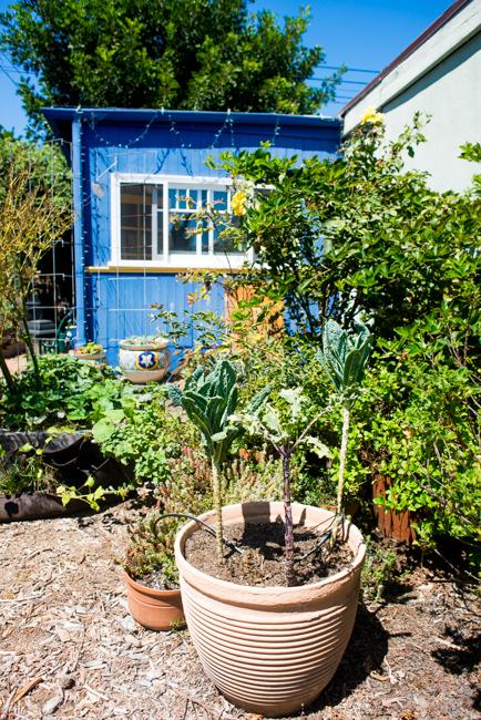 Gardenerd-featured-on-The-Horticult-RMB_8620