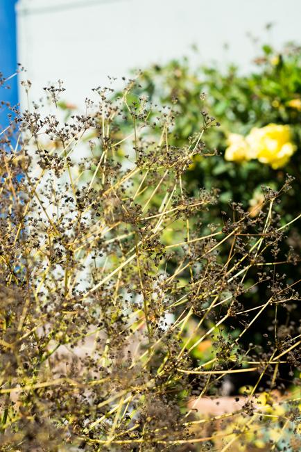 Gardenerd-featured-on-The-Horticult-RMB_8653