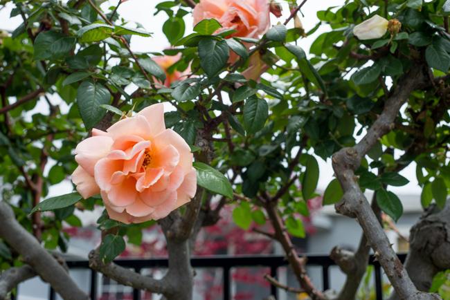 Kimber-Kassner-Garden-ryanbenoitphoto-thehorticult-RMB_1230