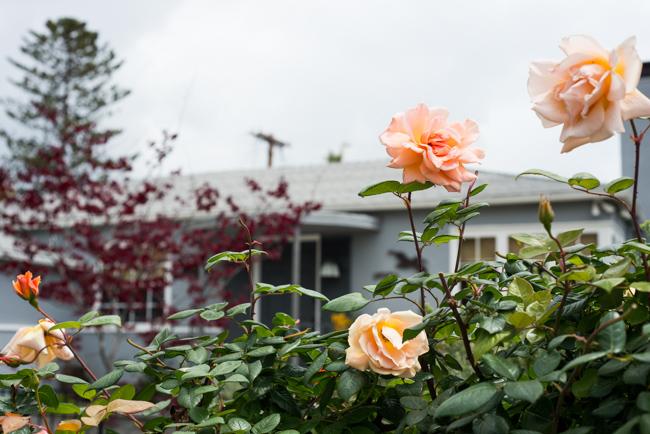 Kimber-Kassner-Garden-ryanbenoitphoto-thehorticult-RMB_1236