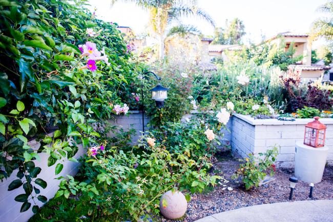 Kimberly-Kassner-Garden-ryanbenoitphoto-thehorticult-RMB_7672
