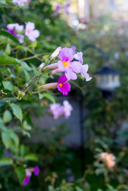 Kimberly-Kassner-Garden-ryanbenoitphoto-thehorticult-RMB_7673